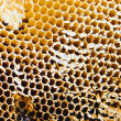Closeup of honey comb on a sunny day — Stock Photo #8198372