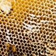 Stock Photo: Closeup of honey comb on a sunny day