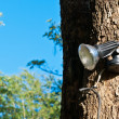 Stock Photo: Small spot light on a large tree