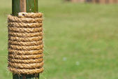 Large rope on bamboo tree with green grass as background — Stock Photo