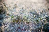 Jinovatka na trávě — Stock fotografie