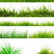 Fresh spring green grass — Stock fotografie