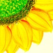 Sunflowers painting — Stock Photo