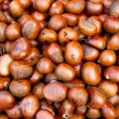 Chestnut — Stock Photo #10462716