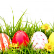 Easter Eggs with flower on Fresh Green Grass — Stock Photo #10463146
