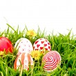 Easter Eggs with flower on Fresh Green Grass — Stock Photo #10463254