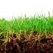 Stock Photo: Fresh spring green grass with soil isolated on white background.