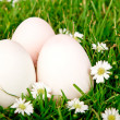 Stock Photo: Eggs in grass with flower