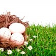 Eggs in nest on  fresh spring green grass - Stock Photo