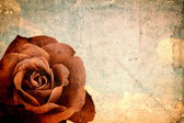 Empty grunge paper with red rose — Stock Photo