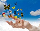 Hand holding butterflies — Stock Photo