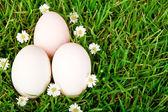 Huevos en la hierba con la flor — Foto de Stock