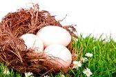 Eggs in nest on fresh spring green grass — Stock Photo