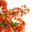 Branch of beautiful orange flower isolated on white background — Stock Photo