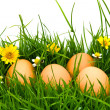 Easter Eggs with flower on Fresh Green Grass over white backgrou — Stock Photo #10611572
