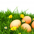 Easter Eggs with flower on Fresh Green Grass over white backgrou — Stock Photo #10611592