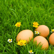Easter Eggs with flower on Fresh Green Grass over white backgrou — Stock Photo #10611593