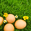 Easter Eggs with flower on Fresh Green Grass over white backgrou — Stock Photo