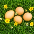 Easter Eggs with flower on Fresh Green Grass over white backgrou — Stock Photo #10611668