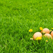 Easter Eggs with flower on Fresh Green Grass over white backgrou — Stock Photo #10611687