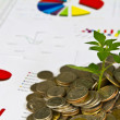 Tree growing from coins on financial Graphs — Stock Photo