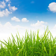 Fresh spring green grass and blue sky — Stock Photo