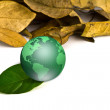 Stock Photo: Green earth with dry leaves