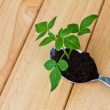 Growing green plant in spoon on wood table — Stock Photo