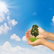 Hands holding a small tree — Stock Photo
