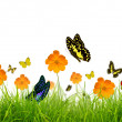 Yellow flowers, green grass and butterfly — Stock Photo