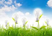 Eco-konzept-glühbirne wachsen im gras gegen blauen himmel — Stockfoto
