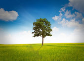Tree and grass field — Stock Photo