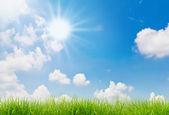 świeże wiosenne zielone trawy i niebieski niebo — Zdjęcie stockowe