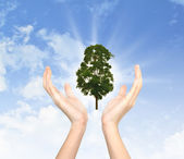 Hands holding a tree — Stock Photo