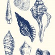Stockvector : 7 various seashells