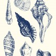 7 various seashells — Vettoriale Stock #10061659