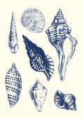 7 様々 な貝殻 — ストックベクタ