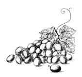 Grapes — Vector de stock