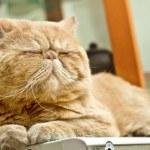 Sleepy cat lying on warm machine unwilling to open its eyes — Stock Photo #9626929