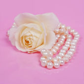 Glamour pearl beads and the white rose — Stock Photo