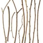 Sticks and twigs — Stock Photo