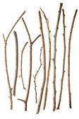 Sticks and twigs — Stock Photo