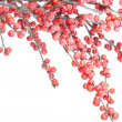 Christmas branch with red berries — Stock Photo #8350668