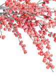 Christmas branch with red berries — Stock Photo