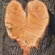 Stock Photo: Heart shape in Tree