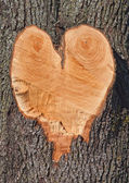 Heart shape in a Tree — Stock Photo