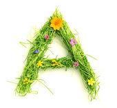 花や草の手紙 — ストック写真
