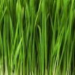 Grass background — Stock Photo #9437510