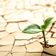 Stock Photo: Plant in dried cracked mud