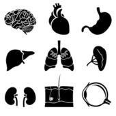 Anatomical icons — Stock Vector